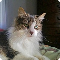 Adopt A Pet :: Elvis - Milford, MI