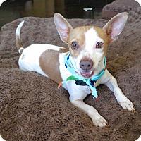 Adopt A Pet :: Allen - Los Angeles, CA