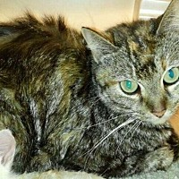 Adopt A Pet :: Ashland - Freeport, FL
