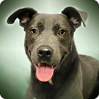Adopt A Pet :: RAY (video) - Los Angeles, CA