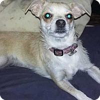 Adopt A Pet :: Mercy - Carthage, NC