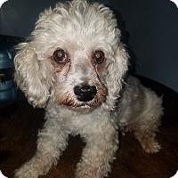 Adopt A Pet :: Bebe - Detroit, MI