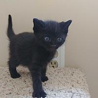 Adopt A Pet :: Obrey - Turnersville, NJ