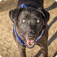 Adopt A Pet :: Babe - Gardnerville, NV
