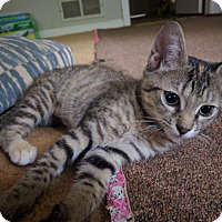 Adopt A Pet :: Astrid - Duluth, GA