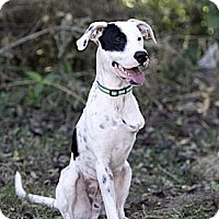 Adopt A Pet :: Checkers - Calgary, AB