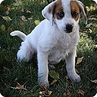 Adopt A Pet :: Si - Broomfield, CO