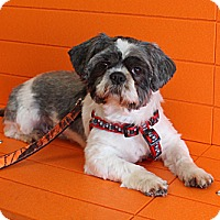 Adopt A Pet :: Bently - Evansville, IN