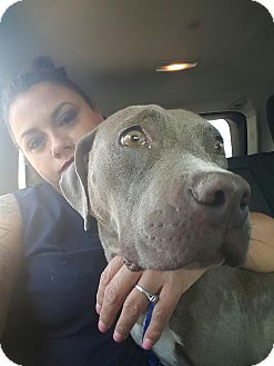 Pit Bull Terrier Mix Dog for adoption in Lubbock, Texas - Gracie