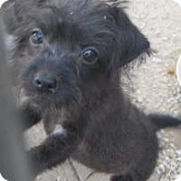 Adopt A Pet :: Tripper - New palestine, IN