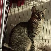 Adopt A Pet :: Henry - Foster me! - Gilbert, AZ
