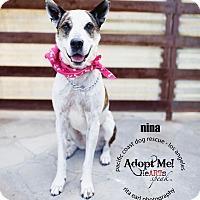 Adopt A Pet :: Nina - VIDEO - Burbank, CA