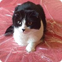 Adopt A Pet :: Dudley - Novato, CA