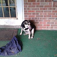Terrier (Unknown Type, Medium) Dog for adoption in New Boston, Texas - Kerry