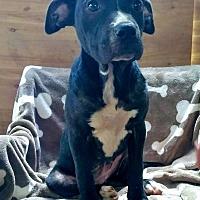 Adopt A Pet :: Sunflower - Lawrenceville, GA
