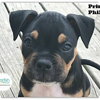 Adopt A Pet :: Prince Phillip - Plainfield, IL