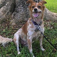Adopt A Pet :: Libby - Davie, FL