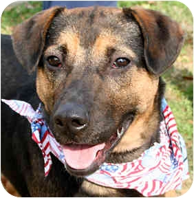Shepherd (Unknown Type)/Rottweiler Mix Dog for adoption in Cincinnati, Ohio - Rowdy