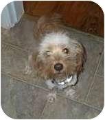 Terrier (Unknown Type, Medium) Mix Puppy for adoption in Worcester, Massachusetts - Cooper