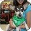 Photo 1 - Rat Terrier Mix Dog for adoption in Arlington, Texas - Jack
