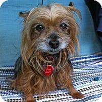 Adopt A Pet :: Contessa - Bunnell, FL