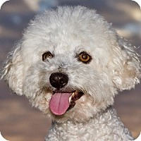 Adopt A Pet :: Calvin - La Costa, CA