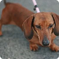 Adopt A Pet :: Oscar - Canoga Park, CA