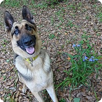Adopt A Pet :: Columbo - Green Cove Springs, FL