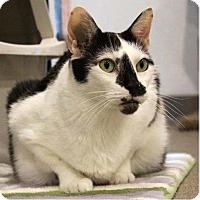 Adopt A Pet :: Zipidy - Boca Raton, FL