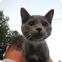 Adopt A Pet :: Baby Girl - Saint Albans, WV