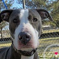 Adopt A Pet :: Diamond - Sidney, OH