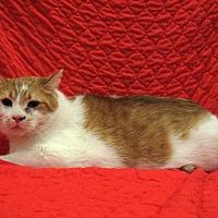 Adopt A Pet :: Samson - Redwood Falls, MN
