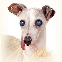 Adopt A Pet :: Peaches - Lincoln, NE