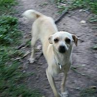 Adopt A Pet :: Veata - Missouri City, TX