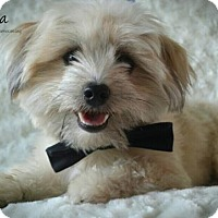 Adopt A Pet :: Taaka - adoption pending - Kenner, LA