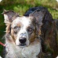 Adopt A Pet :: Daisy - Wimberley, TX