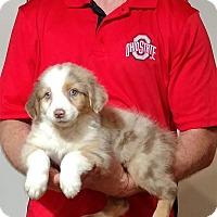 Adopt A Pet :: Mercedes - Gahanna, OH