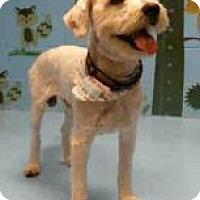 Adopt A Pet :: Ralphy Norton - Seattle, WA