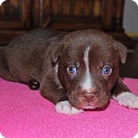 Adopt A Pet :: Maxwell - North Myrtle Beach, SC