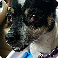 Adopt A Pet :: Brenna - Indianapolis, IN