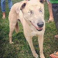 Adopt A Pet :: Sookie - Portland, IN