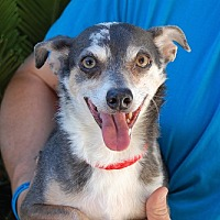Adopt A Pet :: Machu Picchu - Las Vegas, NV