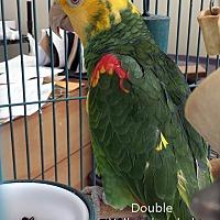 Adopt A Pet :: Chilly - Villa Park, IL