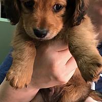 Adopt A Pet :: Bookie - Thousand Oaks, CA