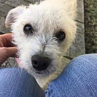 Adopt A Pet :: Tillie - Concord, CA