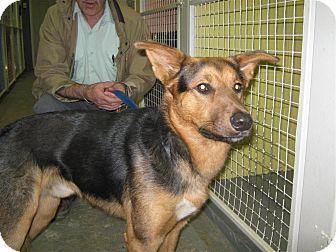 German Shepherd Dog Mix Dog for adoption in Elliot Lake, Ontario - CJ