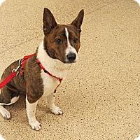 Adopt A Pet :: Jewel - Scottsdale, AZ