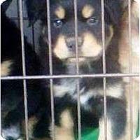 Adopt A Pet :: FERB - Gilbert, AZ