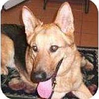 Adopt A Pet :: Zipp - Palmyra, WI