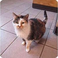 Adopt A Pet :: Kandi - Pascoag, RI